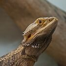Bearded Dragon Profile by ArianaMurphy
