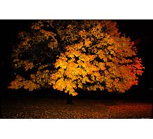 morning tree, 11-2010 Photographic Print