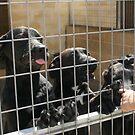 RESCUE ME! Protectora de Animales y Plantas de Málaga 5 by homesick