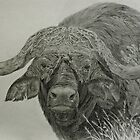 Cape Buffalo by Istvan Natart