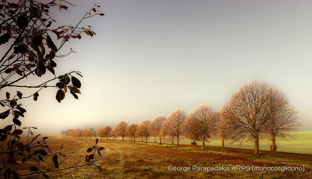 Winter ascending by George Parapadakis (monocotylidono)