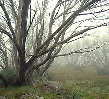 Alpine Mist by Cole Stockman