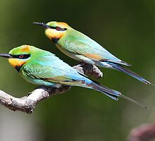 ''Rainbow Bee-eaters'' by bowenite