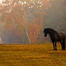 Autumn Contemplation by GrayHorseDesign