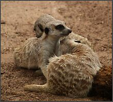 Mountain o' Meerkat! by Sharlene Bicker