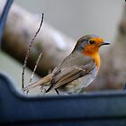Robin, The Rower, County Kilkenny, Ireland by Andrew Jones
