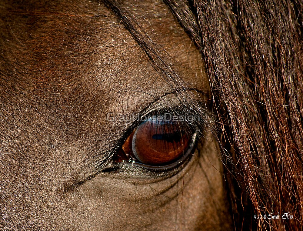 Window to the Soul by GrayHorseDesign