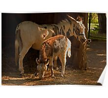 Maternal Pride - Donkeys Poster