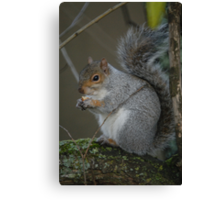I hate squirrels, and I really hate cute. Canvas Print