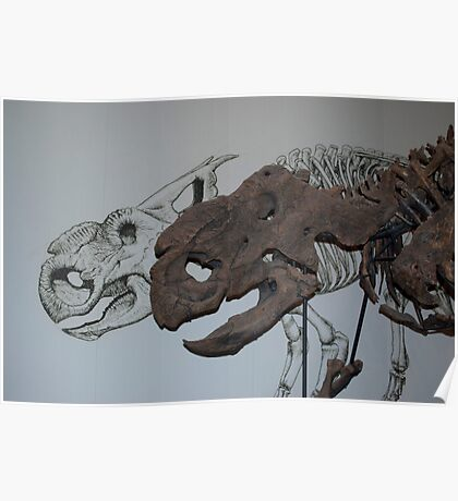 Protoceratops Fossil Skull and Sketch Poster