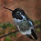 Black-Chinned Hummingbird by Barbara Manis