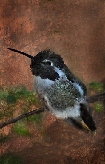 Black-Chinned Hummingbird by Barbara Manis