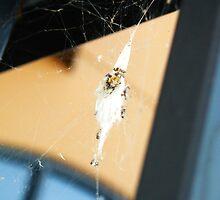 Spider Nest by Amanda O'Halloran
