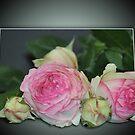 rose card by julie anne  grattan