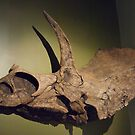 Triceratops Fossil Skull by ArianaMurphy