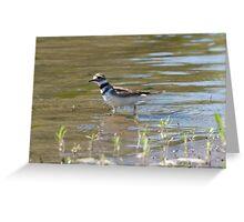 Kill Deer Bird - Yellowstone River Greeting Card