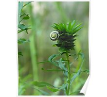Snail and Weed Poster
