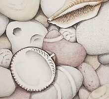 Pebbles, Cockle & Spiral Shells by Fiona Cross