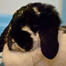 Rorshack, the Lop Eared Rabbit by ArianaMurphy