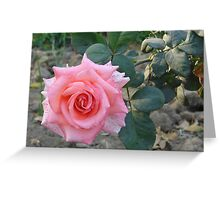 Beautiful Pink Rose Blank Note Card Greeting Card