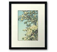 Pear Blossoms Framed Print