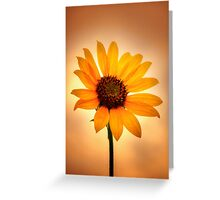 Sunflower v Sunset Greeting Card