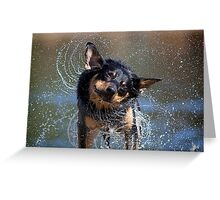 Spin Dry Kelpie Greeting Card