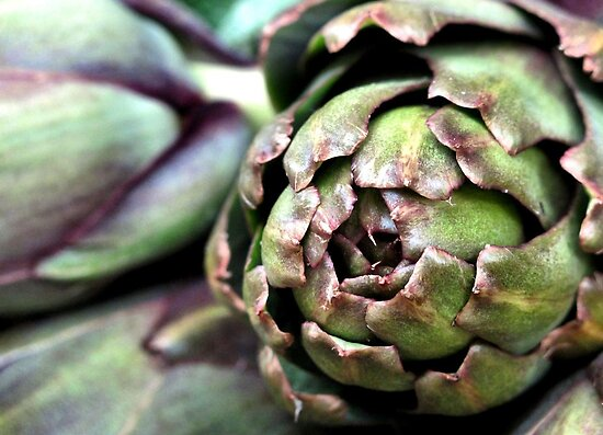 Artichoke hearts by Maureen Grobler