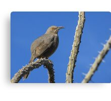 Curved-billed Thrasher ~ I Know Your Watching Me Canvas Print