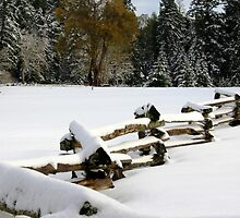 Fence in Snow by TerrillWelch