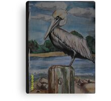 Floridian Pelican on Pappases warf Canvas Print