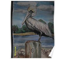 Floridian Pelican on Pappases warf Poster
