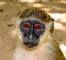 Adorable Monkey by cute-wildlife