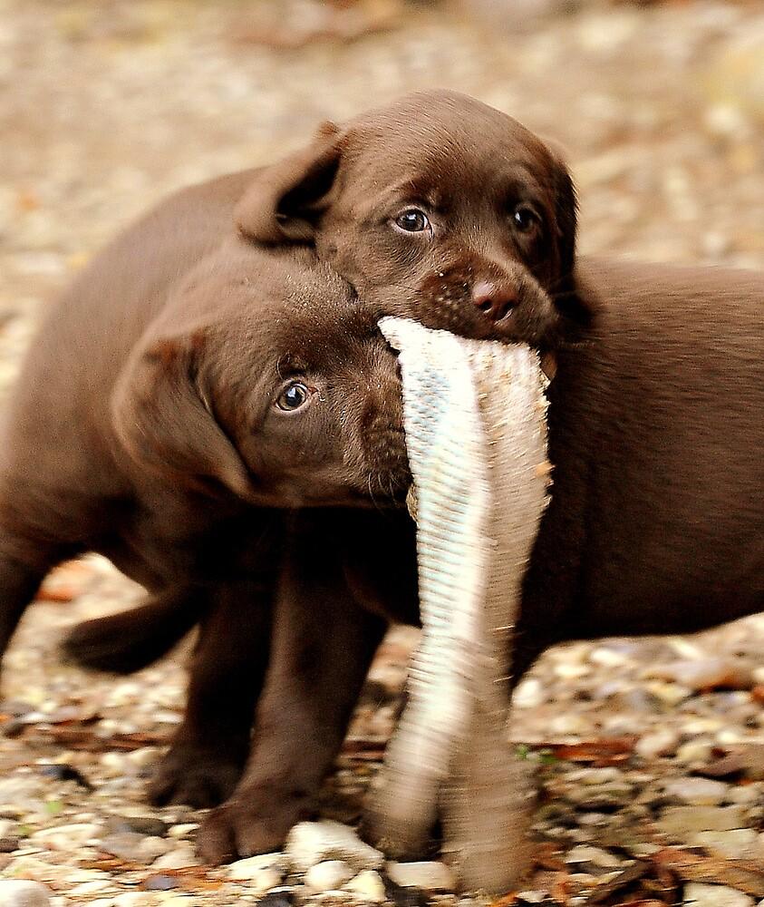Puppy games by Alan Mattison