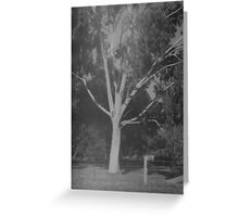 tree and fence, near Grampians Greeting Card