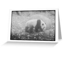 Panda, Adelaide zoo Greeting Card