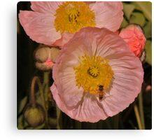 Poppy Pastels! Canvas Print