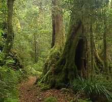 Rainforest with Antarctic Beech by Igor Makunin