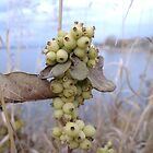Autumn Berries - Lake Chestermere, Alberta by UnknownSpecies