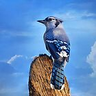 Heavenly Jay by Lynda   McDonald
