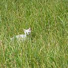 White kitten in grass by Philippe Widling