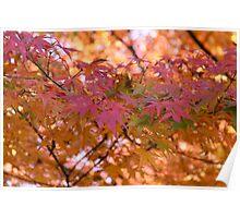 Koku Koen Autumn #3 Poster