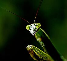 Defender Of The Garden - Preying Mantis by MotherNature2