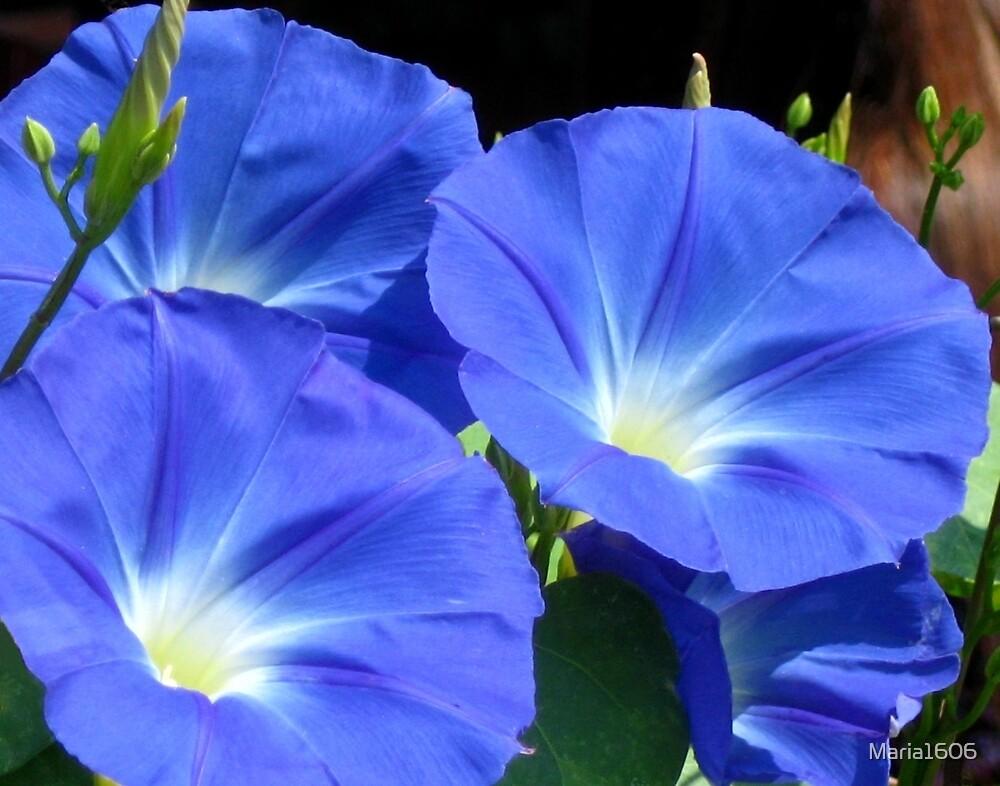 Rhapsody in blue by Maria1606