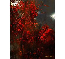 October Sky Photographic Print