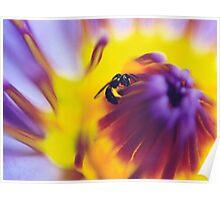 Blue Lotus Bee Poster
