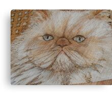 kitty kaboodle Canvas Print