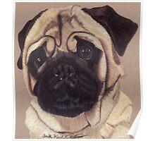 Pug Vignette Poster