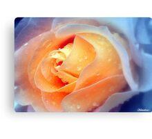 Raindrops On Roses Canvas Print