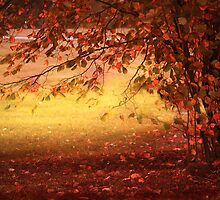 Autumn Colours by Danuta Antas